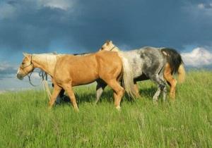 Horsesleadinginfield