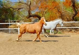 HorsesrunningMD
