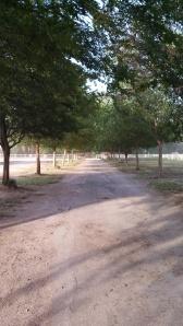 Treelinedlane