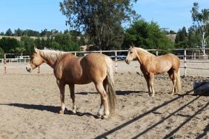 HorsesMyandSky514
