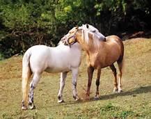horseshoulderscratch